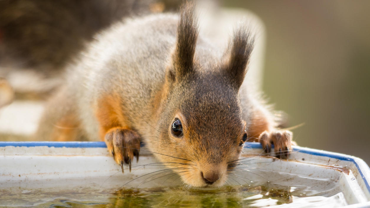 Wildtiere leiden unter Hitze: So können wir ihnen helfen