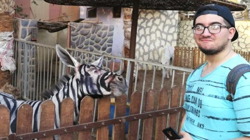 Zoo wird vorgeworfen, Esel als Zebras angemalt zu haben