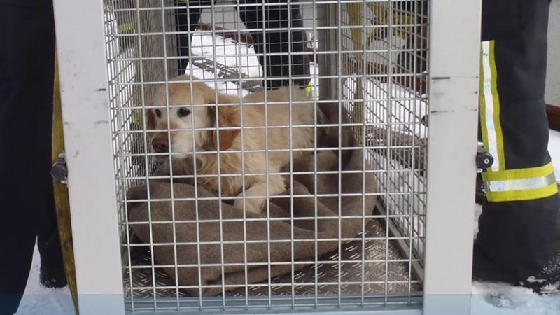 Polizei rettet auf Schiffsdeck festgefrorenen Hund