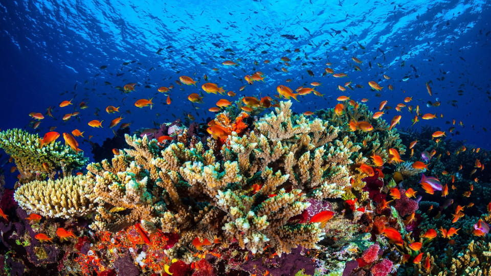 Australien: Millionen für das Great Barrier Reef