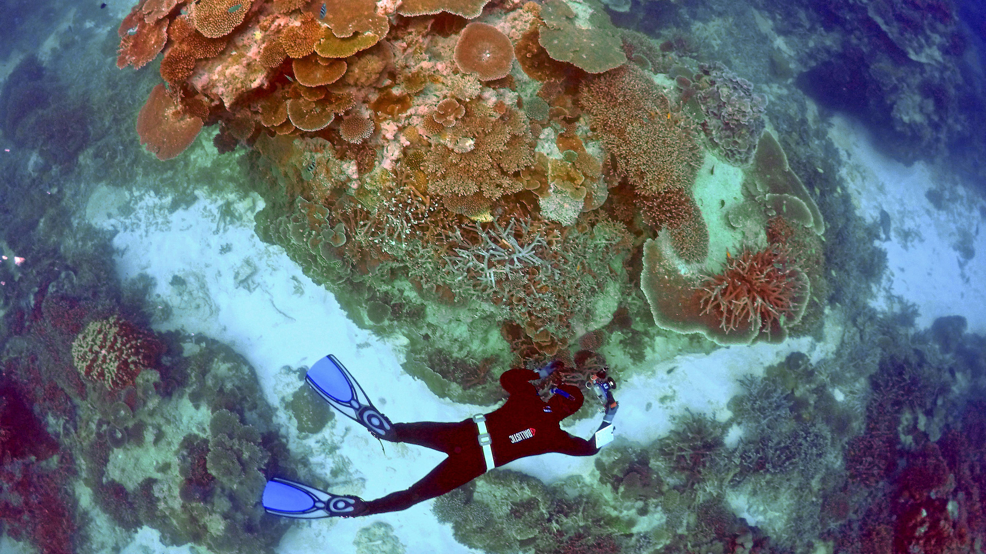 Australien will mit Millioneninvestition das Great Barrier Reef retten