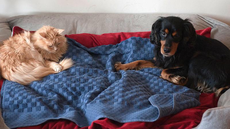 bundesgerichtshof kein generelles verbot von hunden und katzen in mietwohnungen. Black Bedroom Furniture Sets. Home Design Ideas