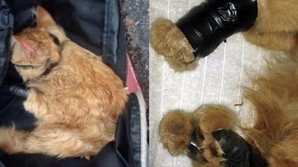 schreckliche bilder us polizei findet gefesselte katze im rucksack eines mannes. Black Bedroom Furniture Sets. Home Design Ideas