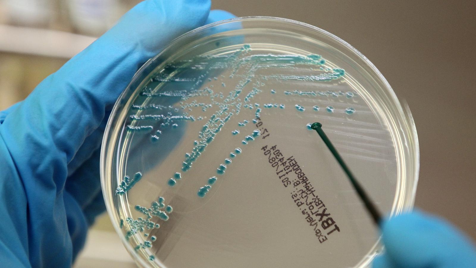 fleischfressende bakterien bilder