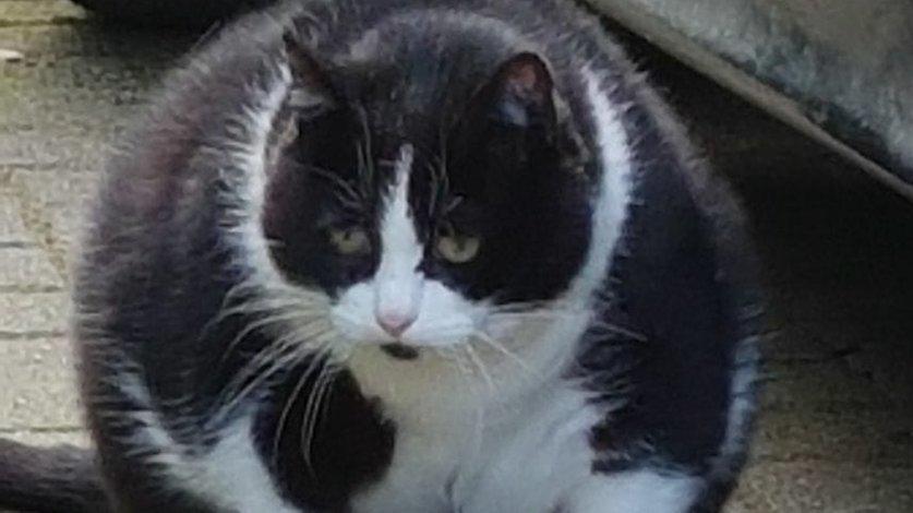 39 pummelinchen 39 wurde gem stet und ausgesetzt fast sieben kilo schwere katze aufgefunden. Black Bedroom Furniture Sets. Home Design Ideas